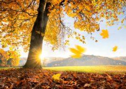 Betreiber von Solaranlagen freuen sich über den goldenen Herbst doppelt